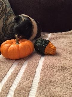 Reese Halloween 2018- pumpkin